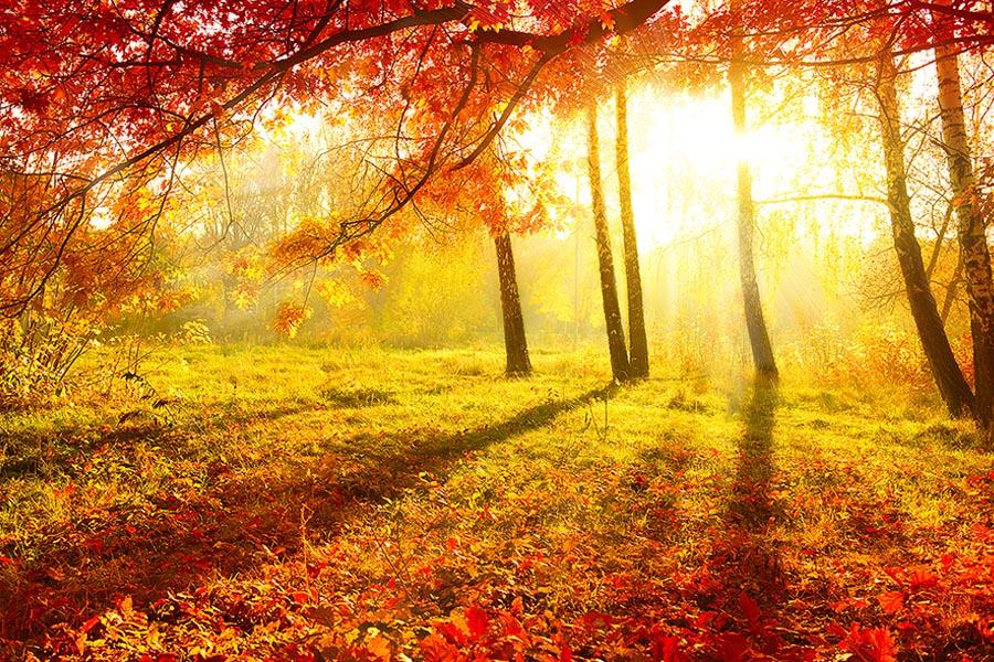 immagine foresta autunnale
